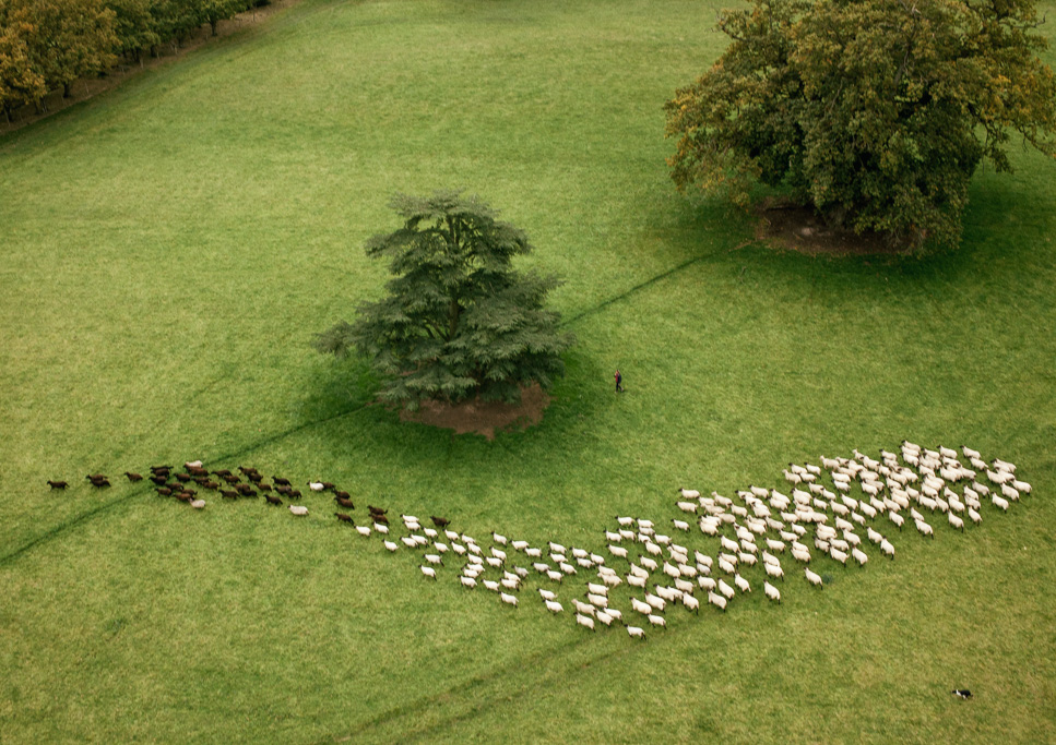 Photo Aerial views of the family farm. Rounding up the sheep.